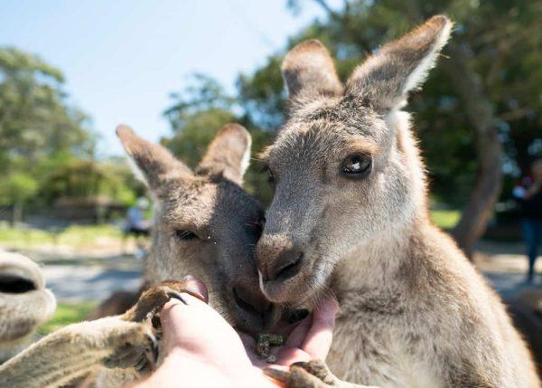 Symbio Wildlife Park School Excursions